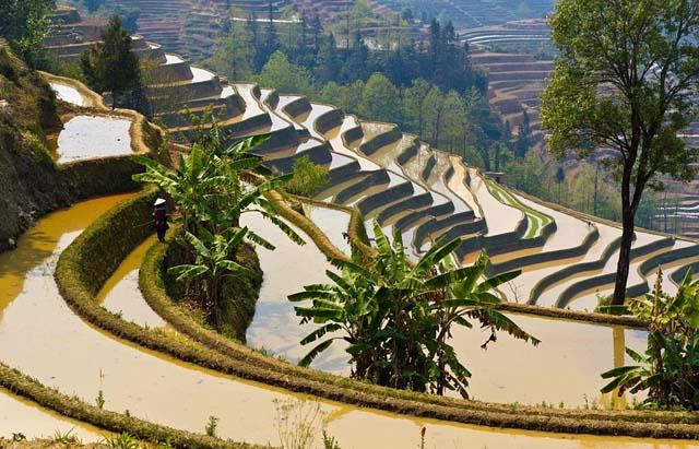 campo_arroz_chino_13