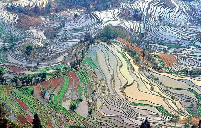 campo_arroz_chino_3