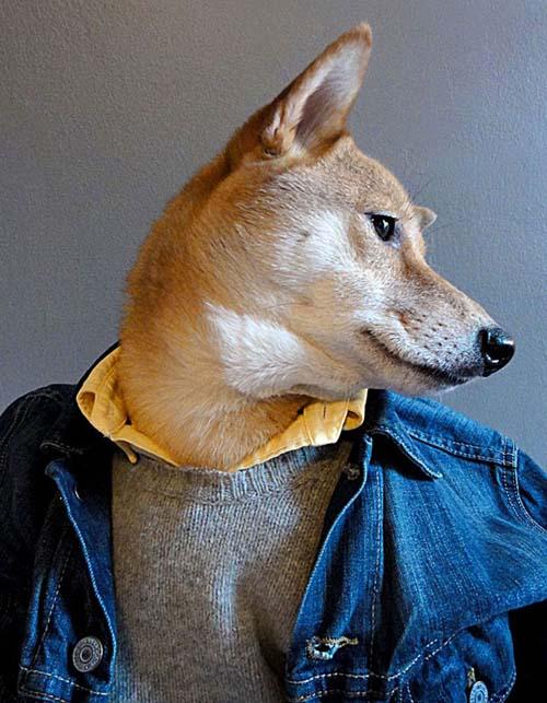 perro_mejor_vestido_4