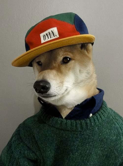 perro_mejor_vestido_8