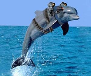 delfin_armado_