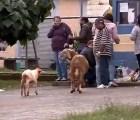 Una cabra se pone loca, y arma un alboroto afuera de una cárcel en Brasil