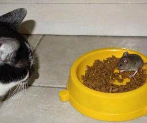 raton_vs_gato_3