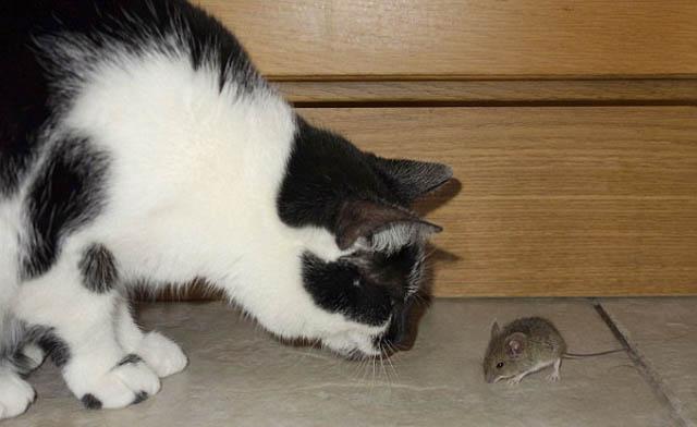 raton_vs_gato_7