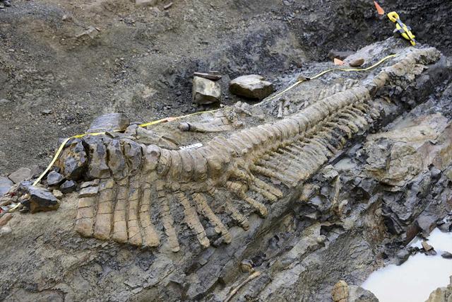hadrosaurio mexico cola de dinosaurio coahuila