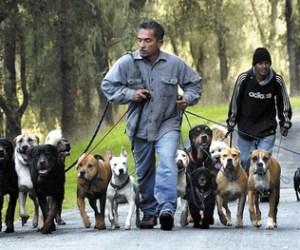 impuesto perros