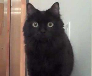 shorty the cat el gato