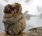 Jigokudani Yaen-koen: el spa para monos