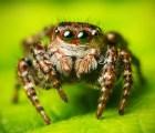 Galería: el lado bello de los insectos
