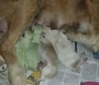 Dos perros marcianos nacieron en España