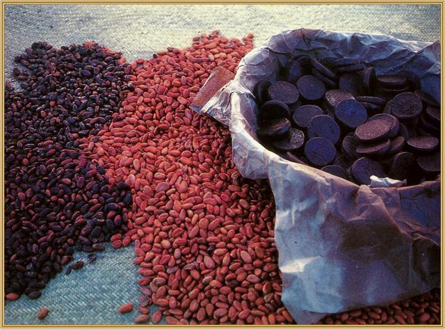 cacao_fermentado
