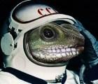 Se pierde una nave llena de geckos en el espacio