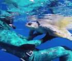 Video: Así agradece una tortuga que la hayan liberado