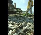Miles de peces mueren en Jalisco: 4 toneladas en laguna de Cajititlán