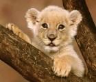 Galería: Los animales más peligrosos, antes de serlo