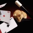 magia_raton