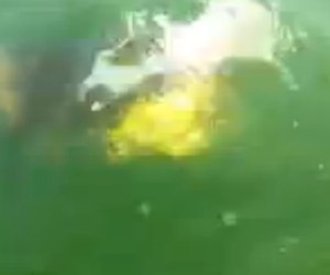 tiburon mero