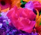 Las flores eléctricas de Torkil Gudnason
