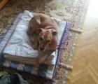 Sacrificaron al perro de mujer con ébola en España #SalvemosaExcalibur