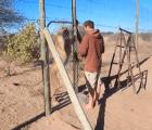 La conmovedora reacción de una leona al reencontrarse con su amigo