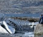 """""""Leviathan"""": una película sombría y casi perfecta"""