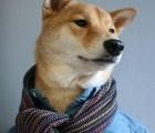 Este perro gana más al mes que tú