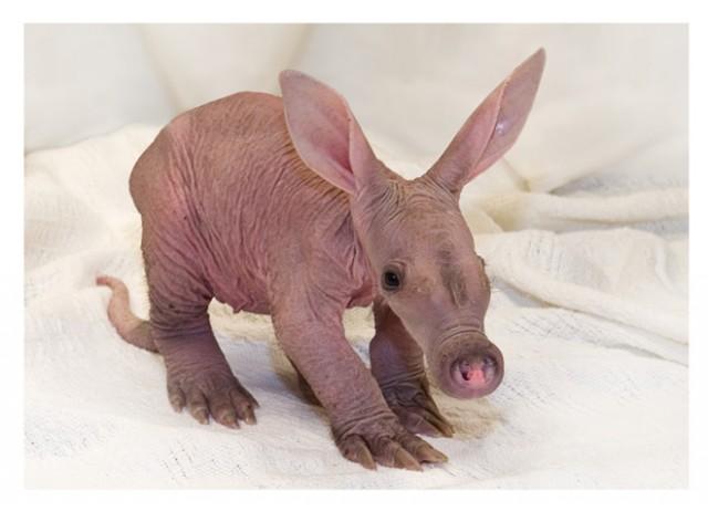 Los animales bebé mas tiernos del mundo