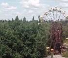 Recorre el desastre de Chernobyl en este video inédito