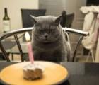 Los gatos odian su propio cumpleaños