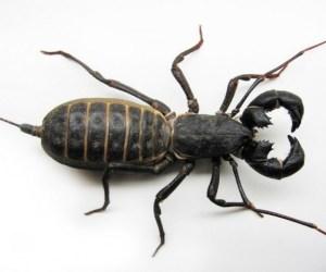 Insectos salidos de tus pesadillas que viven en México