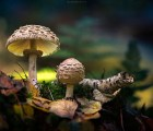 Estos hongos brillan...aunque solo sea para las fotos