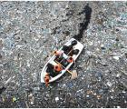 ¿Qué países contaminan más los oceános?