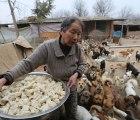 Mujeres chinas cuidan más de 1,000 perros callejeros