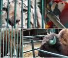 Confiscan 101 animales del zoológico de un diputado