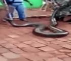 Serpiente de 7 metros fue capturada por el ejército de Brasil