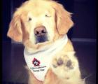 Smiley, el perrito que nació sin ojos pero que inspira al mundo