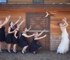 Si las novias aventaran gatos en lugar de ramos...