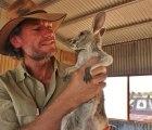 El increíble santuario para bebés canguros huérfanos