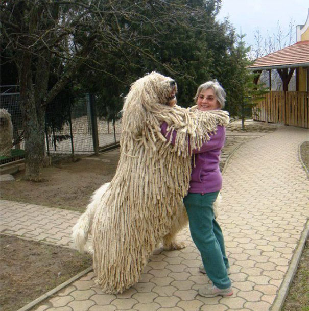 huge-dogs-feel-small-32__605