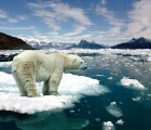 """¿Qué es la sexta """"extinción masiva"""" que preocupa tanto a los científicos?"""