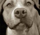 Shelter Dogs: Fotos sobre perros que buscan un hogar