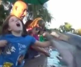 ataque_delfin