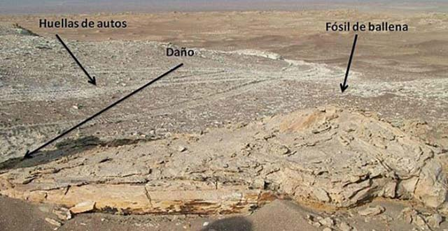 fosiles_dakar_peru_1