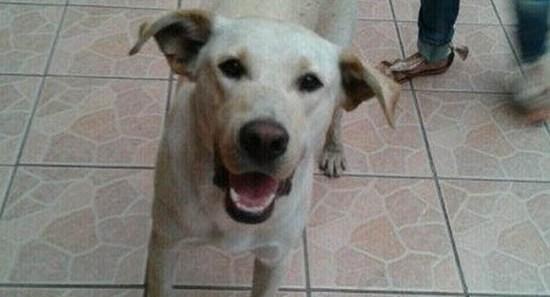 perro_calletano_