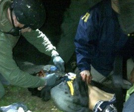 tsarnaev captura boston