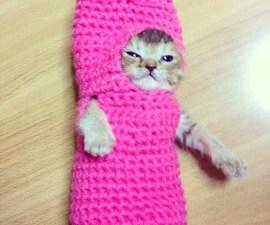 gato_estambre_4