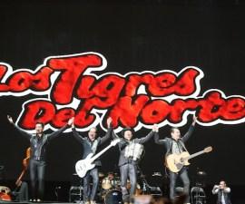 Tigres2