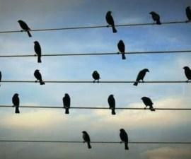 musica aves