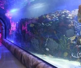 acuario inbursa02