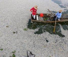 peces muerto jalisco5